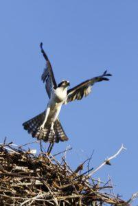 flying-from-nest