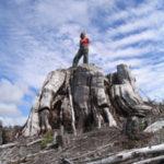 old-growth-stump